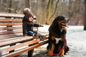 Charming little boy sits on the bench with a Bernese Mountain Do