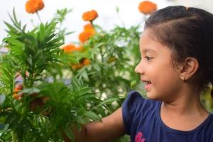 flower-3450544_1920